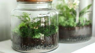 How to Set Up a Terrarium- Martha Stewart