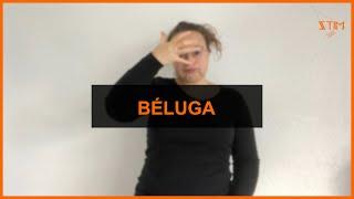 BIOLOGIE MARIN - Béluga