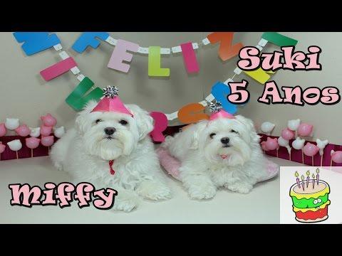 Aniversário da Suki 5 Anos e Miffy