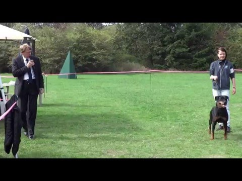 Rottweiler Dog Show (Canada) - Veteran Class-V1 (At The Time, SchH 3 X5)