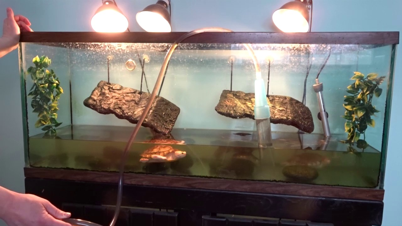 How do you clean a turtle tank thecarpets co for How to keep fish tank clean without changing water