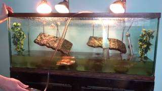 Turtle Tank Cleaning - How I Clean My Turtle Tank