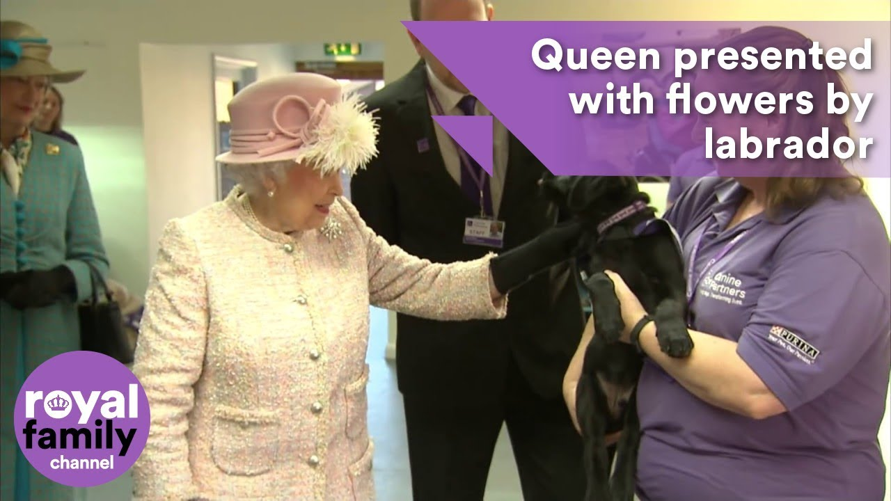 Queen presented with flowers by labrador