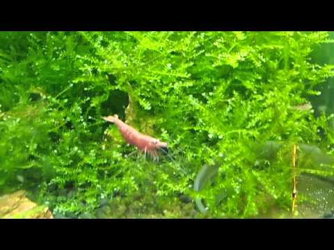 aquarium-bonsai-tree