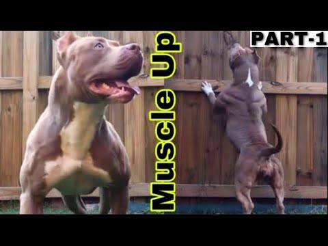 Building Muscles On Your Dog Part-1