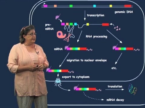 Exons and introns - Melissa Moore (U Mass/HHMI)