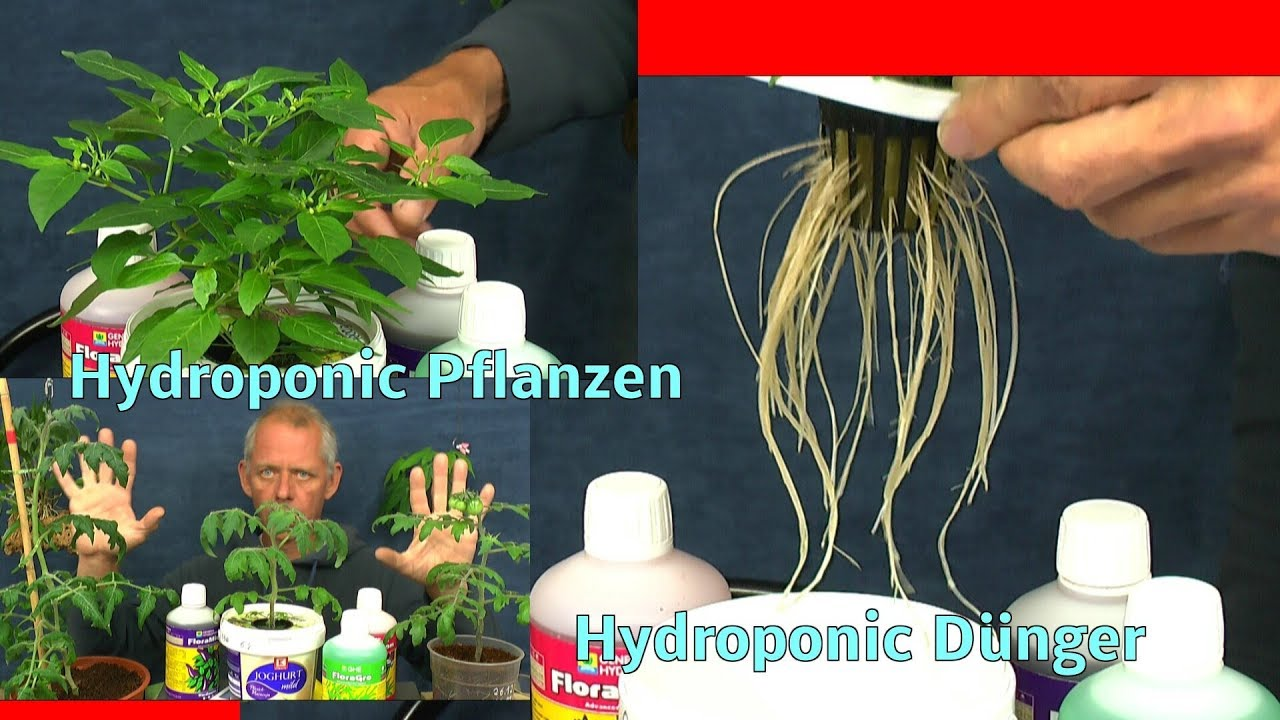 pflanzen in der hydroponic mit hydroponic d nger d ngen und welches wasser tomaten chili und. Black Bedroom Furniture Sets. Home Design Ideas