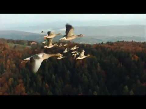 Nomaden der Lüfte - das Geheimnis der Zugvögel Trailer deutsch