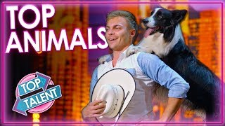 Top 5 Smart Animal Acts on BGT & AGT 2019 | Top Talent
