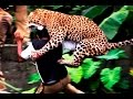 When animal attacks compilation 2015