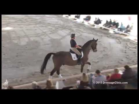 Riding The Canter Zig Zag