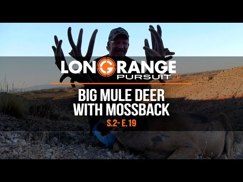 Long Range Pursuit | S2 E19 Big Mule Deer with Mossback