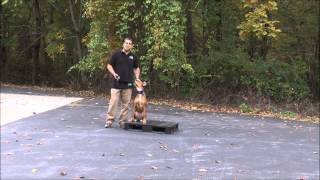 Dog Training For High Level Energy Dogs In Maryland