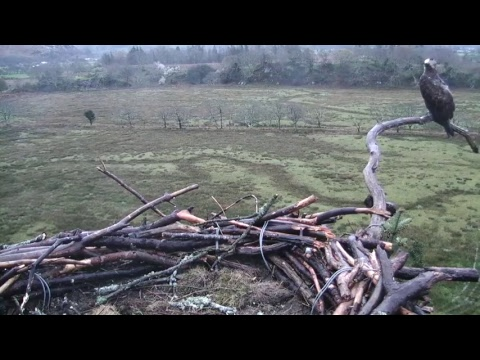 Glaslyn Ospreys Live Stream