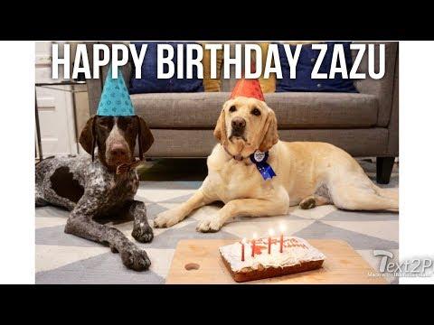 Happy Birthday Zazu