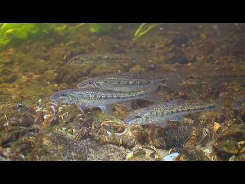 ПЕСКАРЬ. О чём молчат рыбы 48