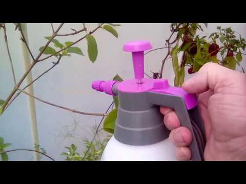 KRATOM and a Update on using Spray-N-Grow, 3-27-18