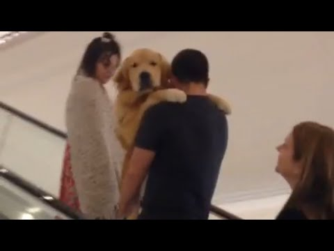 Golden Retriever Gets Carried up Escalator