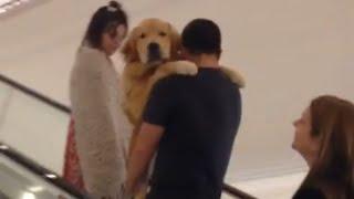 Golden Retriever Gets Carried up Escalator thumbnail