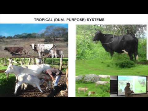 Carlos Manuel Arriaga-Jordan, PhD - Dairy Production Systems in Mexico