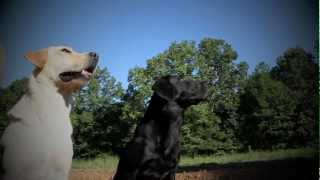 The Wildrose Way: Sporting Dog and Retriever Training The Wildrose Way