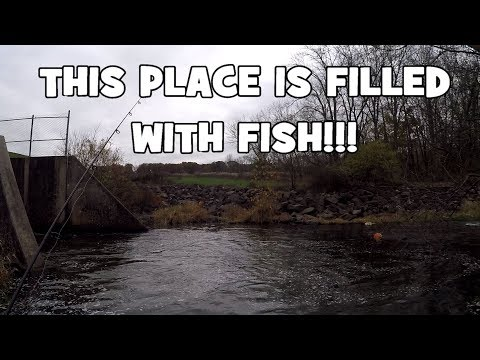 That Place Was FILLED With FISH!!! And It Was My FIRST TIME Fishing It! (Doylestown, PA)