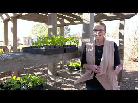 April Horticulture Tips for your Garden