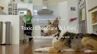 The Advantage Family: Why are Chocolates and Lilies Bad for Dogs and Cats?