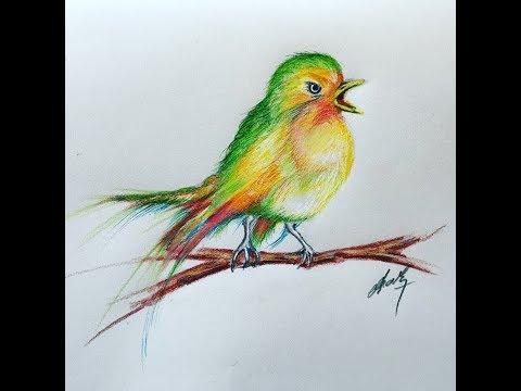 Drawing A Cute Bird Kus Cizimi Youtube