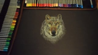 13 years old drawing prodigy | speed drawing: Wolf
