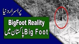 Bigfoot In Urdu - Reality and Proofs - Big Foot in Pakistan - Purisrar Dunya