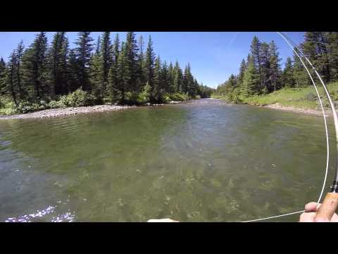 Trout....Old Man River & Others, Alberta