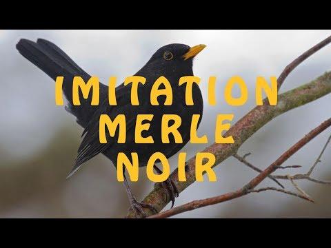 Imitation des chants d'oiseaux