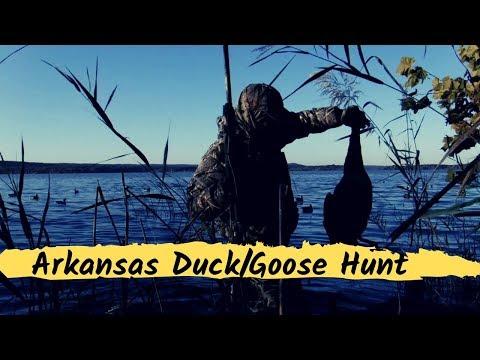 Arkansas Duck Goose Hunt 2019 With A Chesapeake Bay Retriever