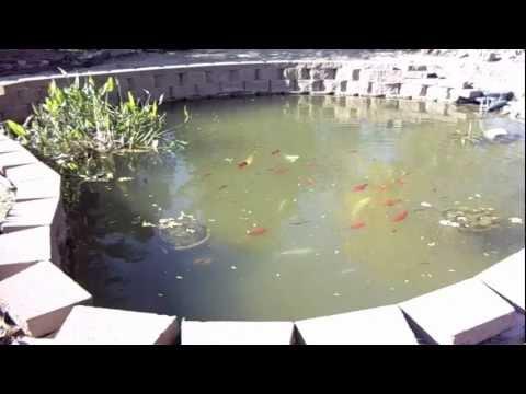 Building a 7500 gallon koi pond youtube for Koi pond gallons