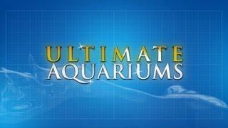 Ultimate Aquariums opening