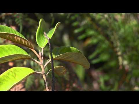 [NCTV] Weari - Pandathlon, une course pour la nature