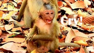 Wow!Baby Timo run cry-run scream very upset mom not care,Timo hungry till confuse touch milk Joey