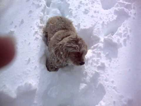Cute and Stupid Dog!