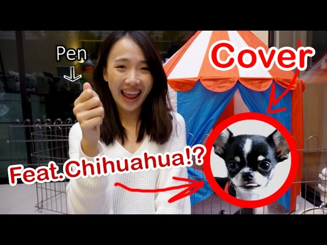 PPAP【Cover】- Pen Pineapple Apple Pen // feat.Chihuahua