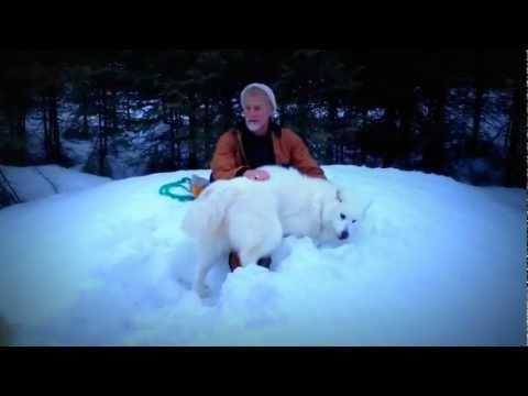 Canadian Eskimo Dog - A True Omega 3 Animal