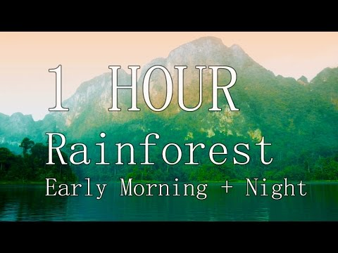 1 Hour Rainforest Jungle Nature Sounds (gibbons, birds, crickets) - Relaxation, Focus, Meditation