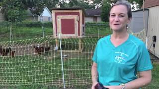 A Trip to the Urban Farm: A day at The Tuckers'