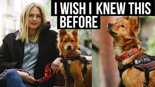 5 Things I Wish I Knew BEFORE Fostering a Dog