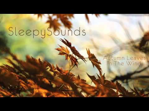 Autumn Leaves in Wind - 9 hour soundscape for sleep sound, meditation, ambience, ASMR