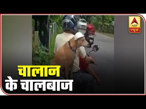 Dog Travelling As Pillion Wear A Helmet, Video Goes Viral | ABP News