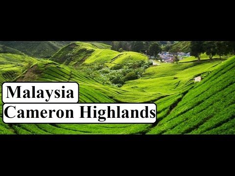 Malaysia-Beautiful Cameron Highlands  Part 8