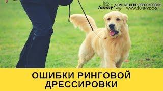 Ошибки ринговой дрессировки  или как испортить собаку