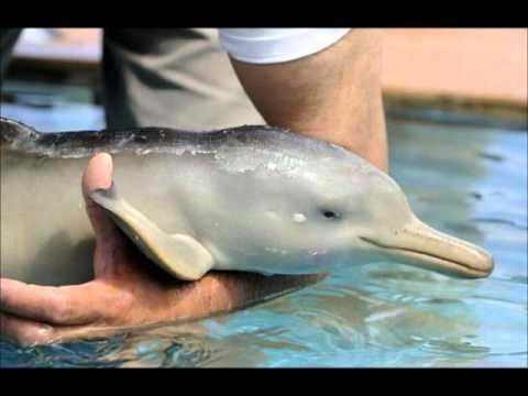 Baby Girl Wallpaper Pink The Most Cute Baby Dolphin Youtube