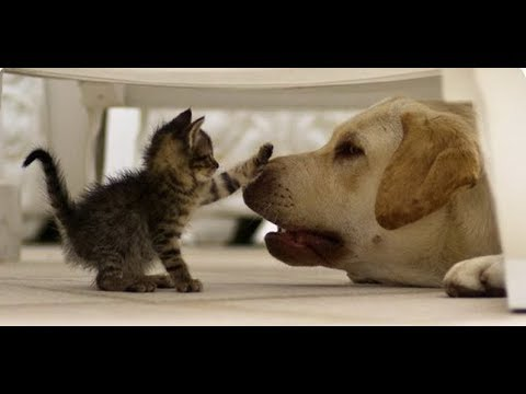 Enemy or friend? Funny cats and dogs  a selection of jokes!